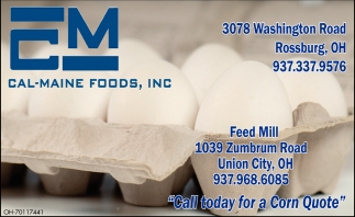 High quality fresh eggs and egg products